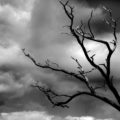 Black Cloud Barren Tree